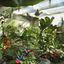 Butterfly House. Interno © Fondazione Nazionale Carlo Collodi
